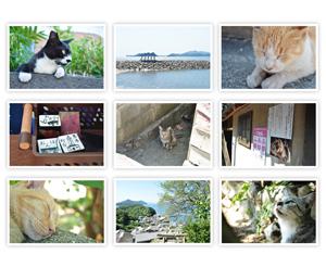ネコと男木島とわたし